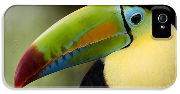 Toucan iPhone 5 Case - Close-up Of Keel-billed Toucan by Panoramic Images