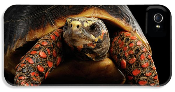 Close-up Of Red-footed Tortoises, Chelonoidis Carbonaria, Isolated Black Background IPhone 5 Case by Sergey Taran