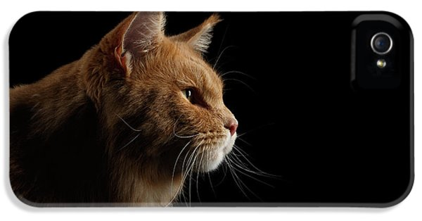 Cat iPhone 5 Case - Close-up Portrait Ginger Maine Coon Cat Isolated On Black Background by Sergey Taran