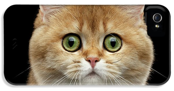 Cat iPhone 5 Case - Close-up Portrait Of Golden British Cat With Green Eyes by Sergey Taran