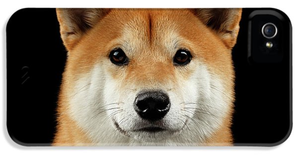 Close-up Portrait Of Head Shiba Inu Dog, Isolated Black Background IPhone 5 / 5s Case by Sergey Taran
