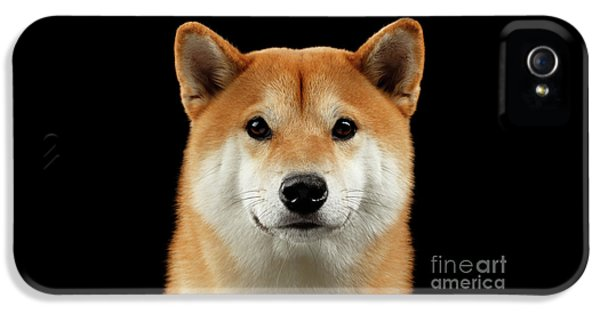 Close-up Portrait Of Head Shiba Inu Dog, Isolated Black Background IPhone 5 Case by Sergey Taran