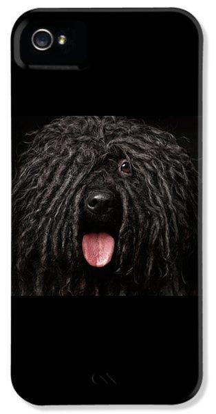 Dog iPhone 5 Case - Close Up Portrait Of Puli Dog Isolated On Black by Sergey Taran