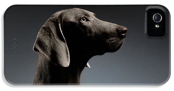 Dog iPhone 5 Case - Close-up Portrait Weimaraner Dog In Profile View On White Gradient by Sergey Taran