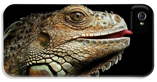 Close-upgreen Iguana Isolated On Black Background IPhone 5 Case by Sergey Taran