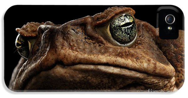 Closeup Cane Toad - Bufo Marinus, Giant Neotropical Or Marine Toad Isolated On Black Background IPhone 5 Case