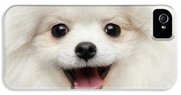 Dog iPhone 5 Case - Closeup Furry Happiness White Pomeranian Spitz Dog Curious Smiling by Sergey Taran