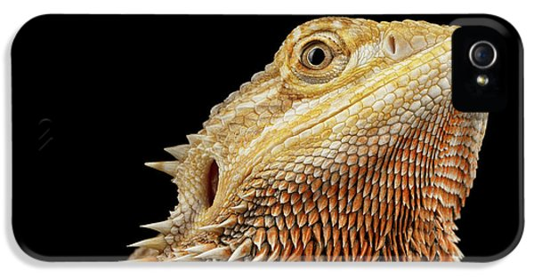 Closeup Head Of Bearded Dragon Llizard, Agama, Isolated Black Background IPhone 5 Case by Sergey Taran