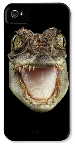 Closeup Head Of Young Cayman Crocodile , Reptile With Opened Mouth Isolated On Black Background, Fro IPhone 5 Case