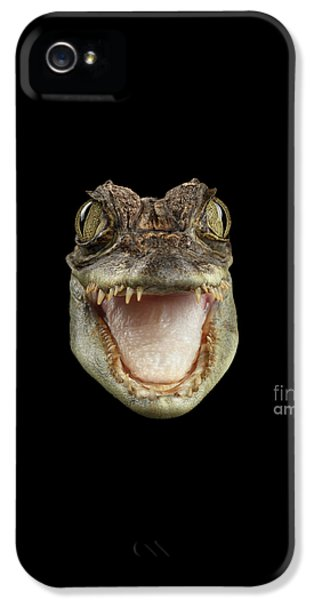 Closeup Head Of Young Cayman Crocodile , Reptile With Opened Mouth Isolated On Black Background, Fro IPhone 5 Case by Sergey Taran