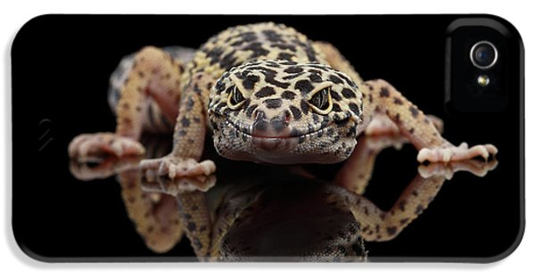 Closeup Leopard Gecko Eublepharis Macularius Isolated On Black Background, Front View IPhone 5 Case