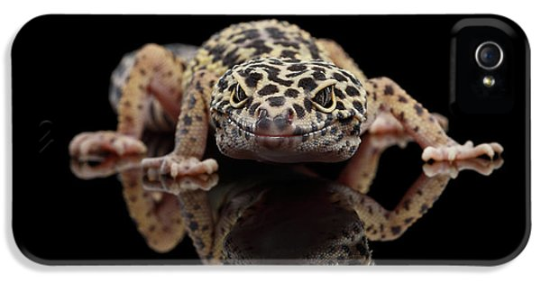 Closeup Leopard Gecko Eublepharis Macularius Isolated On Black Background, Front View IPhone 5 Case by Sergey Taran