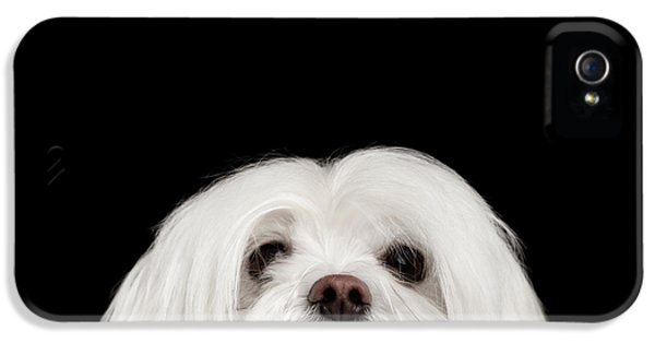 Dog iPhone 5 Case - Closeup Nosey White Maltese Dog Looking In Camera Isolated On Black Background by Sergey Taran