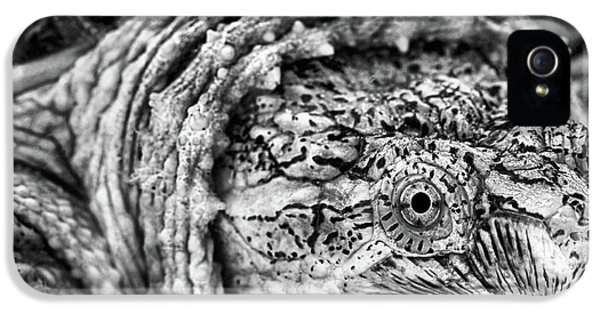 IPhone 5 Case featuring the photograph Closeup Of A Snapping Turtle by JC Findley