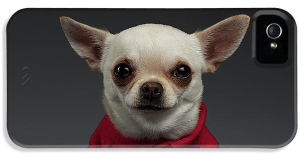 Dog iPhone 5 Case - Closeup Portrait Chihuahua Dog In Stylish Clothes. Gray Background by Sergey Taran