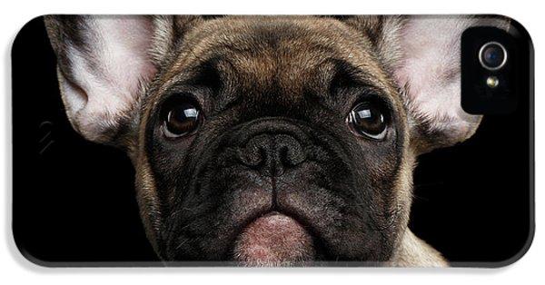 Dog iPhone 5 Case - Closeup Portrait French Bulldog Puppy, Cute Looking In Camera by Sergey Taran