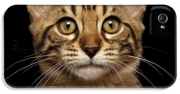 Closeup Portrait Of Bengal Kitty Isolated Black Background IPhone 5 / 5s Case by Sergey Taran