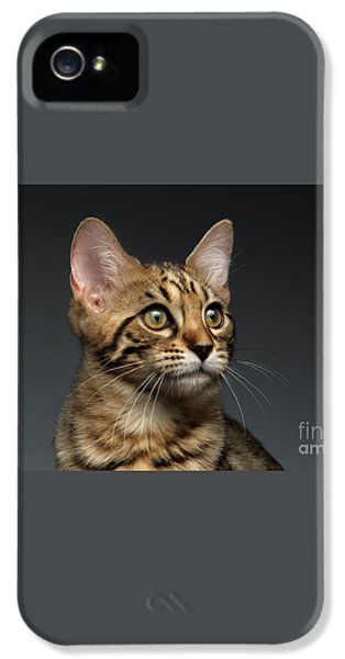 Closeup Portrait Of Bengal Male Kitty On Dark Background IPhone 5 Case by Sergey Taran