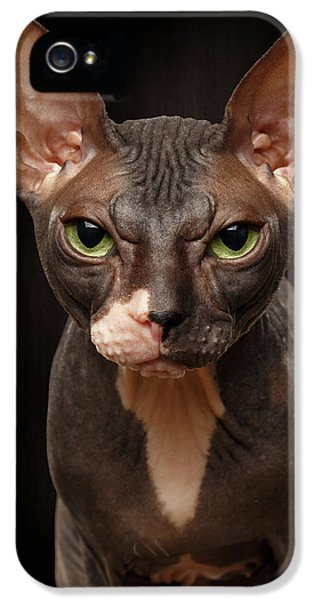 Cat iPhone 5 Case - Closeup Portrait Of Grumpy Sphynx Cat Front View On Black  by Sergey Taran