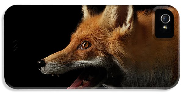 Closeup Portrait Of Red Fox In Profile Isolated On Black  IPhone 5 Case by Sergey Taran