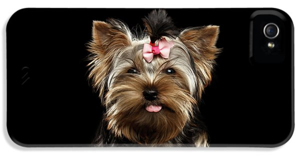 Closeup Portrait Of Yorkshire Terrier Dog On Black Background IPhone 5 Case