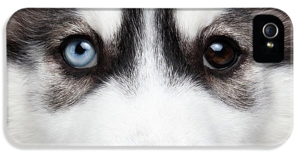 Dog iPhone 5 Case - Closeup Siberian Husky Puppy Different Eyes by Sergey Taran