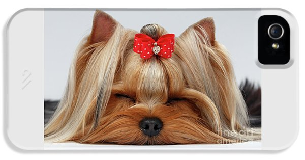 Closeup Yorkshire Terrier Dog With Closed Eyes Lying On White  IPhone 5 Case by Sergey Taran