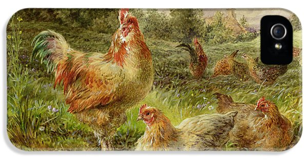 Cochin China Fowls IPhone 5 / 5s Case by George Hickin