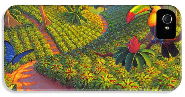 Coffee Plantation IPhone 5 Case by Robin Moline
