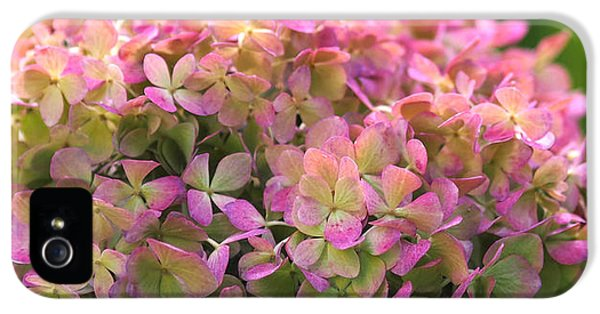 Color-changing Little Lime Hydrangea IPhone 5 Case