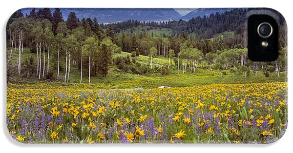 Color Of Spring IPhone 5 Case by Leland D Howard