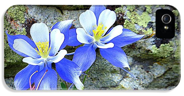 IPhone 5 Case featuring the photograph Colorado Columbines by Karen Shackles