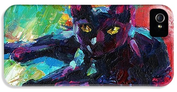 Animal iPhone 5 Case - Colorful Black Cat Painting By Svetlana by Svetlana Novikova