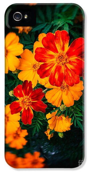 IPhone 5 Case featuring the photograph Colorful Flowers by Silvia Ganora