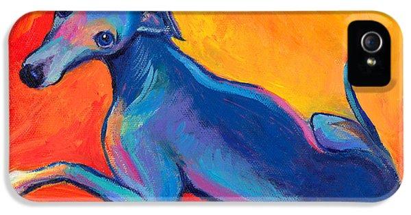 Austin iPhone 5 Case - Colorful Greyhound Whippet Dog Painting by Svetlana Novikova