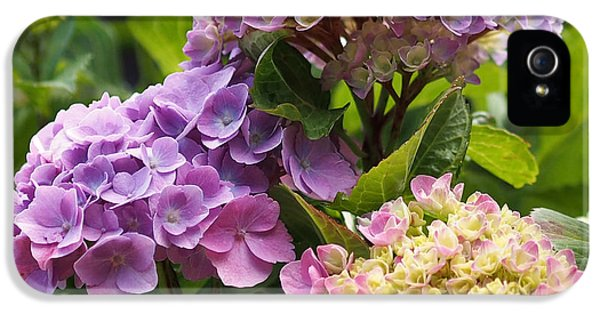 Colorful Hydrangea Blossoms IPhone 5 Case by Rona Black