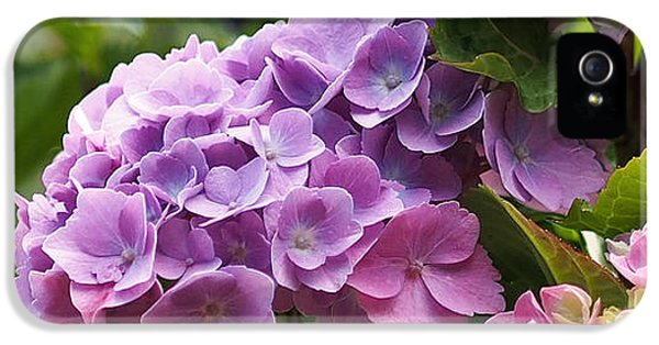 Colorful Hydrangea Blossoms IPhone 5 Case