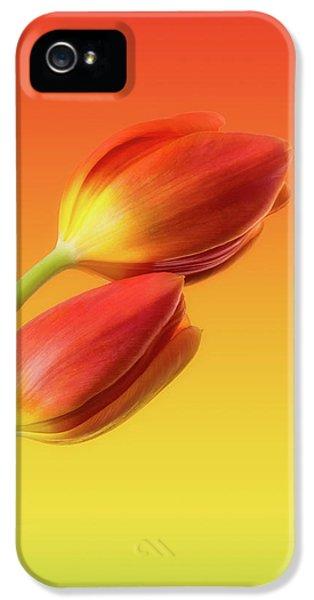 Tulip iPhone 5 Case - Colorful Tulips by Wim Lanclus