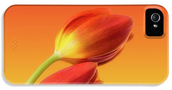 Colorful Tulips IPhone 5 Case by Wim Lanclus