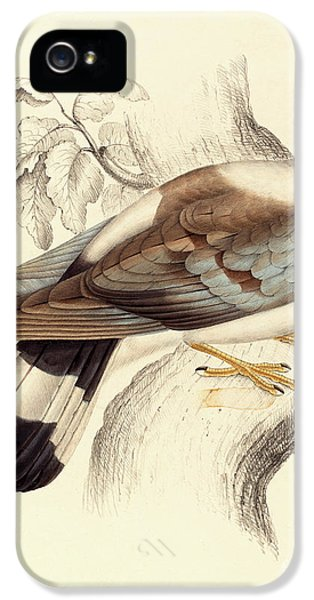 Columba Leuconota, Snow Pigeon IPhone 5 / 5s Case by Elizabeth Gould