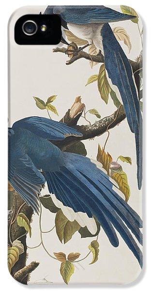 Bluejay iPhone 5 Case - Columbia Jay by John James Audubon