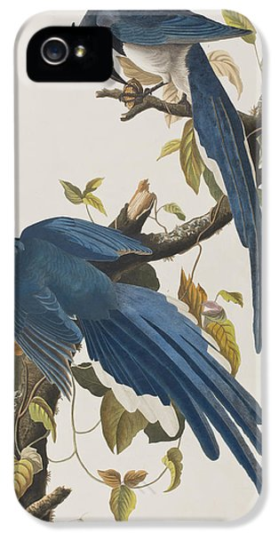Columbia Jay IPhone 5 / 5s Case by John James Audubon