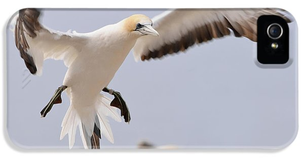 Coming In To Land IPhone 5 Case by Werner Padarin