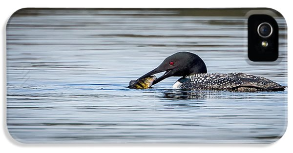 Common Loon IPhone 5 / 5s Case by Bill Wakeley