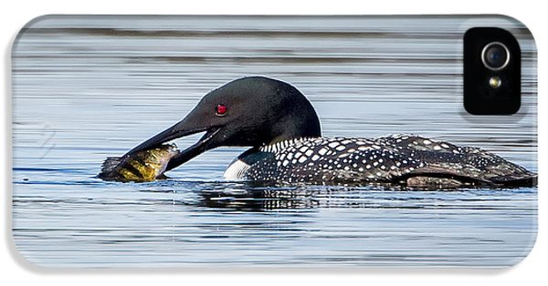 Common Loon Square IPhone 5 Case