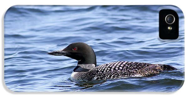 Common Loon IPhone 5 Case