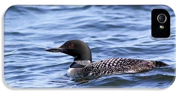 Common Loon IPhone 5 / 5s Case by Teresa Zieba