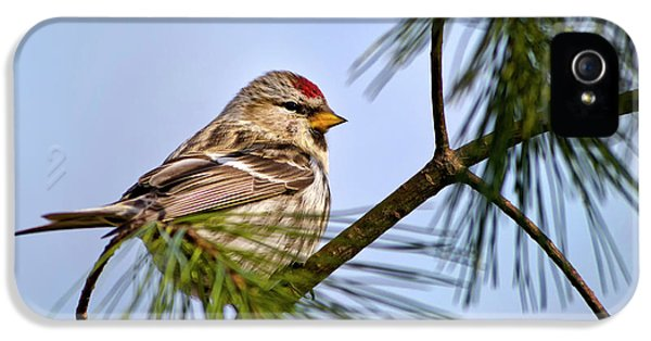 IPhone 5 Case featuring the photograph Common Redpoll Bird by Christina Rollo