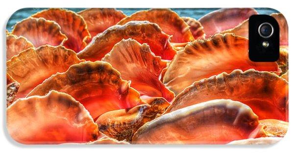 Conch Parade IPhone 5 Case