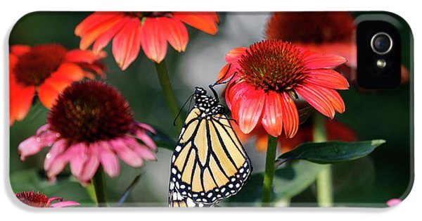 Cone Flowers With Monarch Butterfly Photo IPhone 5 Case by Luana K Perez